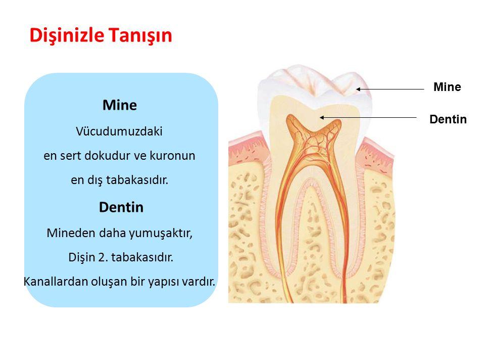 Dişinizle Tanışın Parlak Gülüşler Parlak Gelecekeler Mine Dentin Mine Vücudumuzdaki en sert dokudur ve kuronun en dış tabakasıdır. Dentin Mineden daha