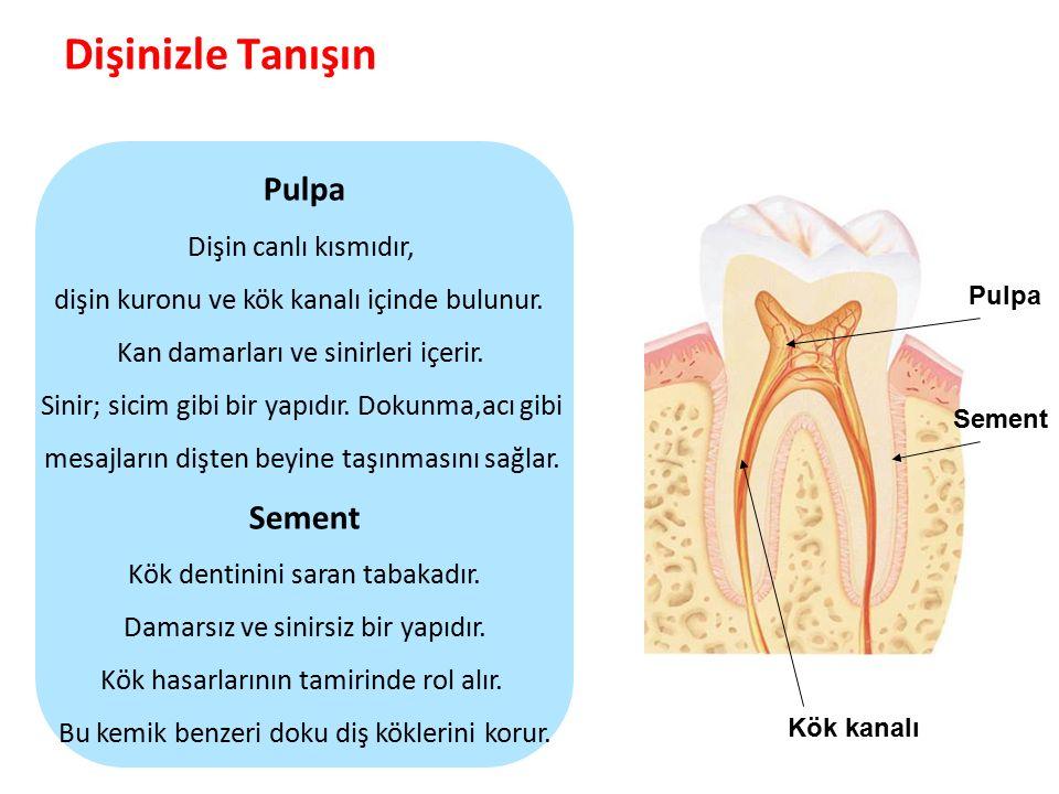 Dişinizle Tanışın Parlak Gülüşler Parlak Gelecekeler Pulpa Sement Kök kanalı Pulpa Dişin canlı kısmıdır, dişin kuronu ve kök kanalı içinde bulunur.