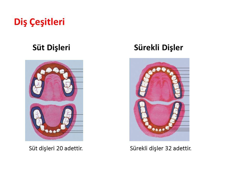 Diş Çeşitleri Süt Dişleri Sürekli Dişler Parlak Gülüşler Parlak Gelecekeler Süt dişleri 20 adettir.