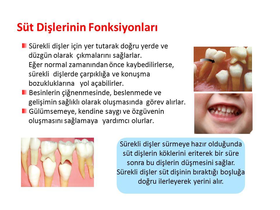 Süt Dişlerinin Fonksiyonları Sürekli dişler için yer tutarak doğru yerde ve düzgün olarak çıkmalarını sağlarlar. Eğer normal zamanından önce kaybedili