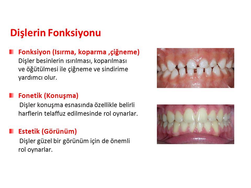 Dişlerin Fonksiyonu Fonksiyon (Isırma, koparma,çiğneme) Dişler besinlerin ısırılması, koparılması ve öğütülmesi ile çiğneme ve sindirime yardımcı olur.