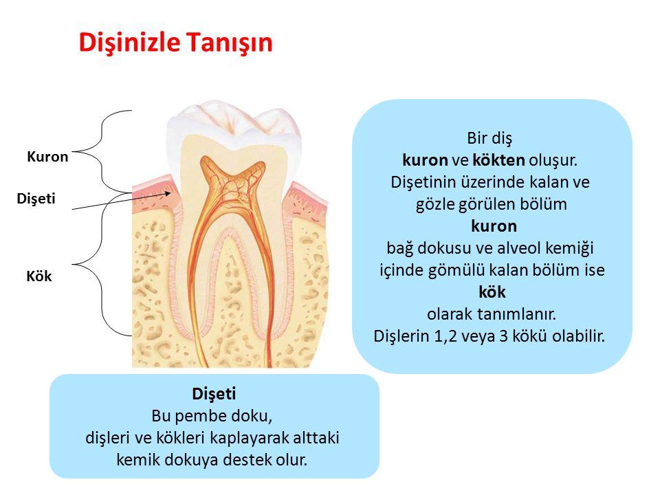 Dişinizle Tanışın Parlak Gülüşler Parlak Gelecekeler Alveol Kemiği Diş kökleri, bağ dokusu ile dişi çevreleyen kemik dokuya bağlanır.