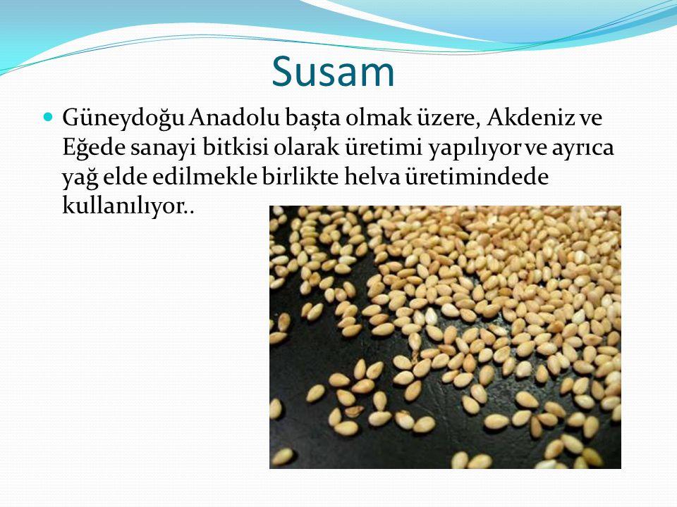 Susam Güneydoğu Anadolu başta olmak üzere, Akdeniz ve Eğede sanayi bitkisi olarak üretimi yapılıyor ve ayrıca yağ elde edilmekle birlikte helva üretim
