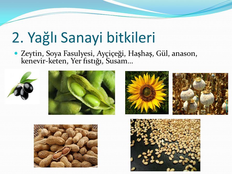 2. Yağlı Sanayi bitkileri Zeytin, Soya Fasulyesi, Ayçiçeği, Haşhaş, Gül, anason, kenevir-keten, Yer fıstığı, Susam…