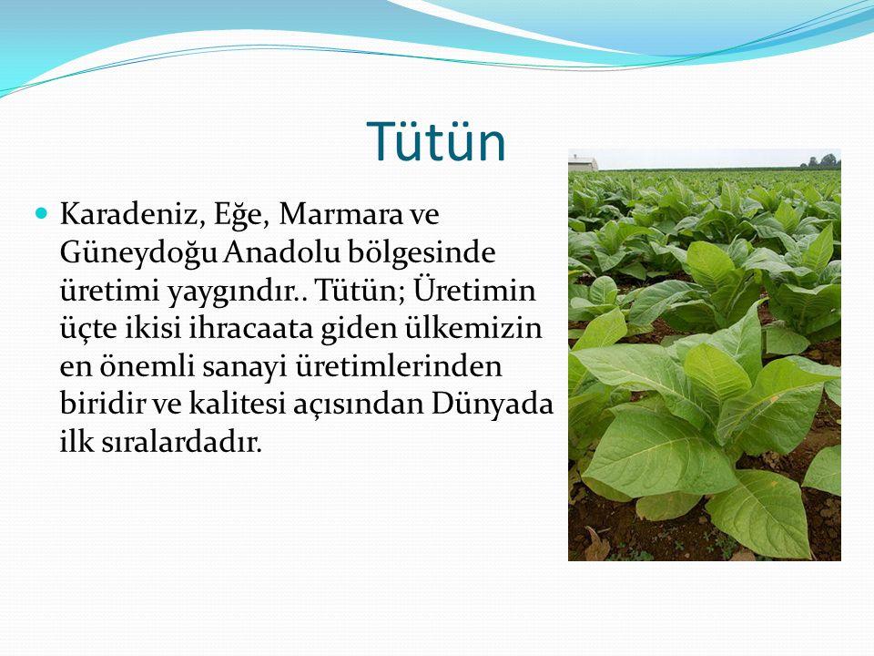Tütün Karadeniz, Eğe, Marmara ve Güneydoğu Anadolu bölgesinde üretimi yaygındır.. Tütün; Üretimin üçte ikisi ihracaata giden ülkemizin en önemli sanay