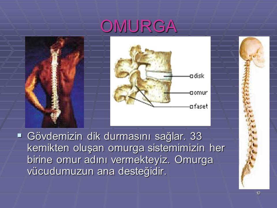 12 OMURGA GGGGövdemizin dik durmasını sağlar. 33 kemikten oluşan omurga sistemimizin her birine omur adını vermekteyiz. Omurga vücudumuzun ana des