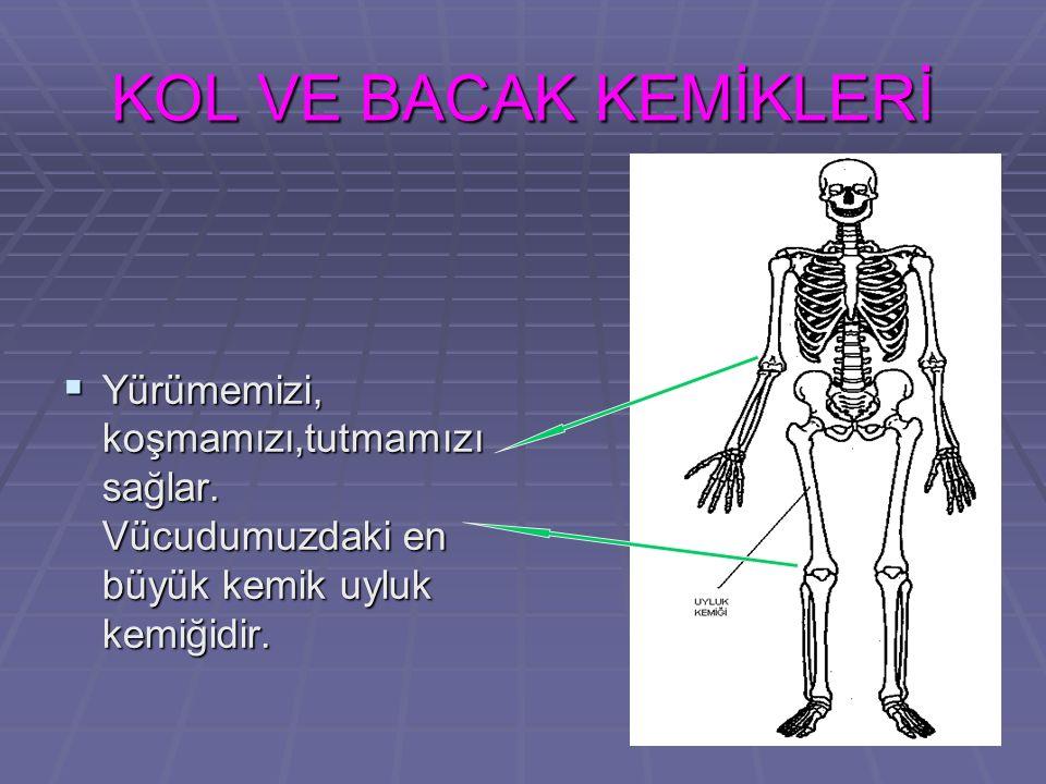 13 KOL VE BACAK KEMİKLERİ  Yürümemizi, koşmamızı,tutmamızı sağlar. Vücudumuzdaki en büyük kemik uyluk kemiğidir.