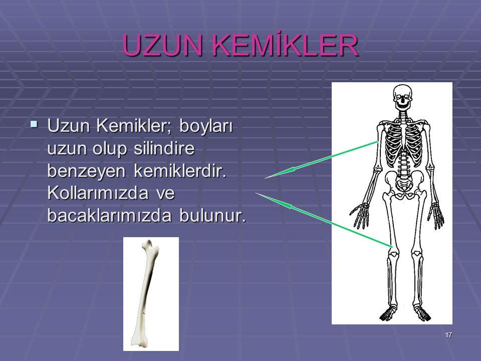 17 UZUN KEMİKLER UUUUzun Kemikler; boyları uzun olup silindire benzeyen kemiklerdir. Kollarımızda ve bacaklarımızda bulunur.