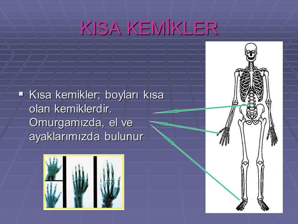 18 KISA KEMİKLER KKKKısa kemikler; boyları kısa olan kemiklerdir. Omurgamızda, el ve ayaklarımızda bulunur