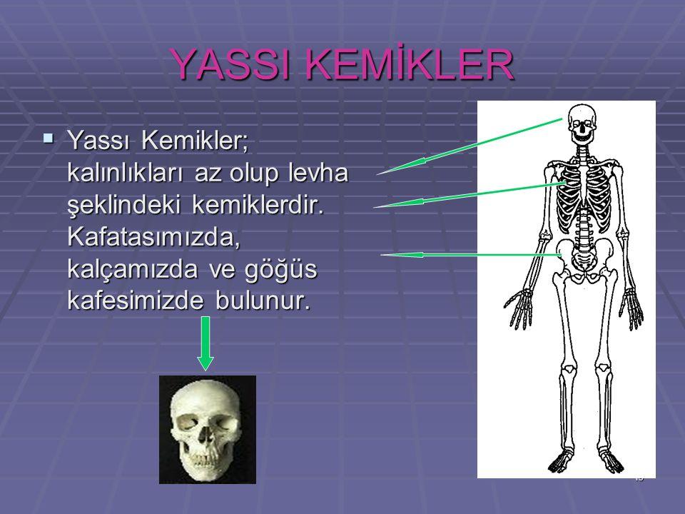 19 YASSI KEMİKLER YYYYassı Kemikler; kalınlıkları az olup levha şeklindeki kemiklerdir. Kafatasımızda, kalçamızda ve göğüs kafesimizde bulunur.