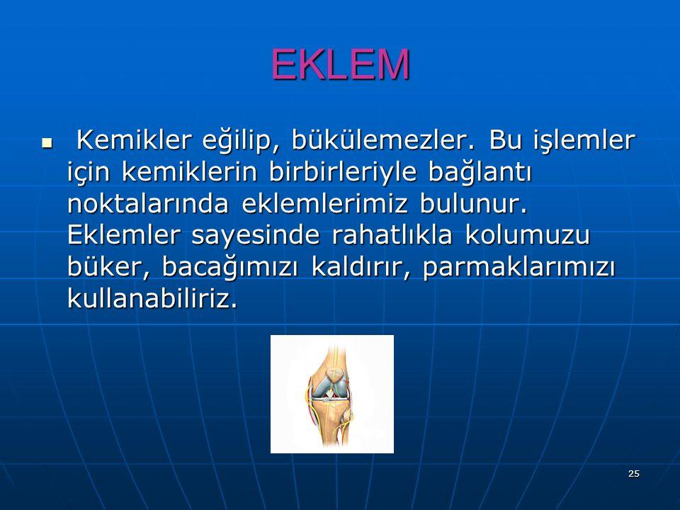 25 EKLEM K Kemikler eğilip, bükülemezler. Bu işlemler için kemiklerin birbirleriyle bağlantı noktalarında eklemlerimiz bulunur. Eklemler sayesinde rah