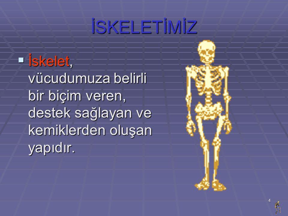 4 İSKELETİMİZ İİİİskelet, vücudumuza belirli bir biçim veren, destek sağlayan ve kemiklerden oluşan yapıdır.
