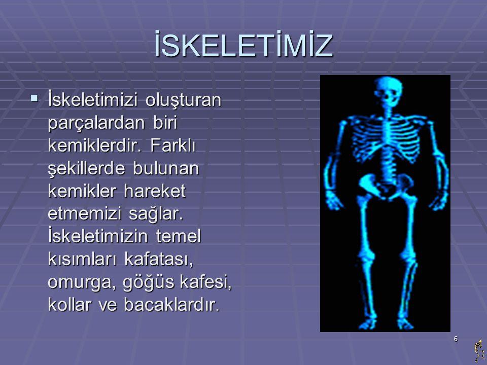 6 İSKELETİMİZ  İskeletimizi oluşturan parçalardan biri kemiklerdir. Farklı şekillerde bulunan kemikler hareket etmemizi sağlar. İskeletimizin temel k