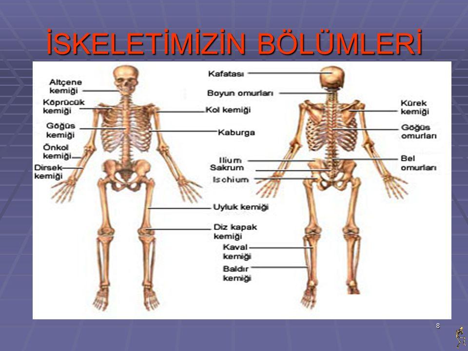 9 KEMİKLERİMİZ  Doğduğunuz andan itibaren tüm kemikler aynı şekilde ve çok orantılı olarak gelişip, uzarlar.