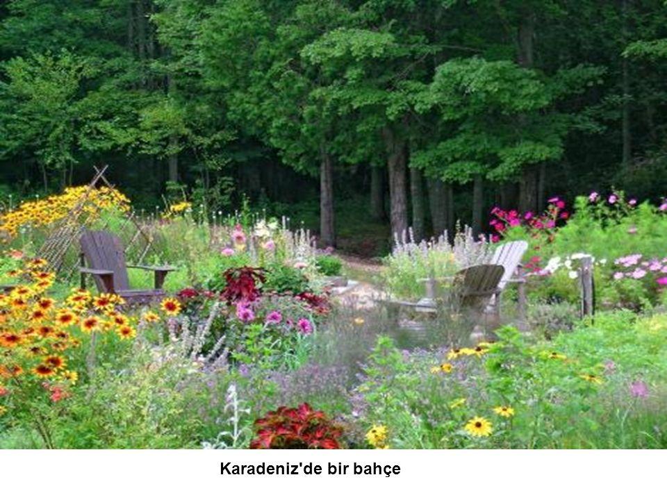 Karadeniz de bir bahçe