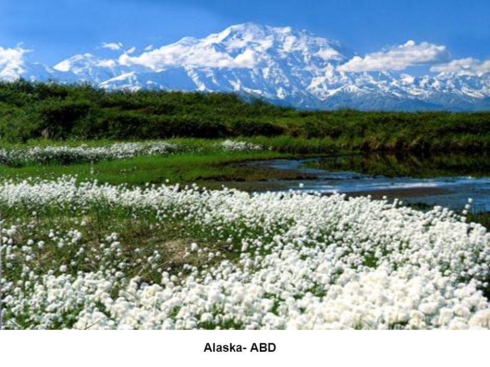 Alaska- ABD
