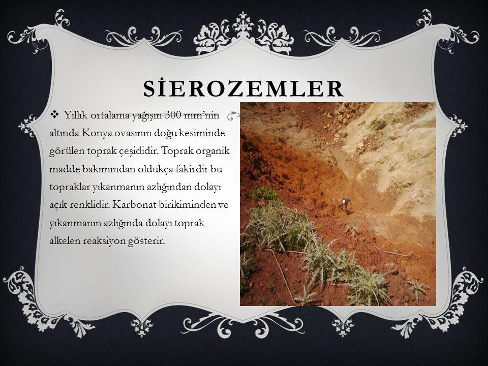 SİEROZEMLER  Yıllık ortalama yağışın 300 mm'nin altında Konya ovasının doğu kesiminde görülen toprak çeşididir. Toprak organik madde bakımından olduk