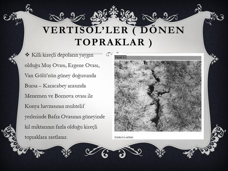 VERTISOL'LER ( DÖNEN TOPRAKLAR )  Killi kireçli depoların yaygın olduğu Muş Ovası, Ergene Ovası, Van Gölü'nün güney doğusunda Bursa – Karacabey arası