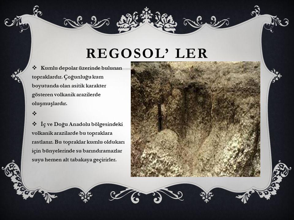 REGOSOL' LER  Kumlu depolar üzerinde bulunan topraklardır. Çoğunluğu kum boyutunda olan asitik karakter gösteren volkanik arazilerde oluşmuşlardır. 