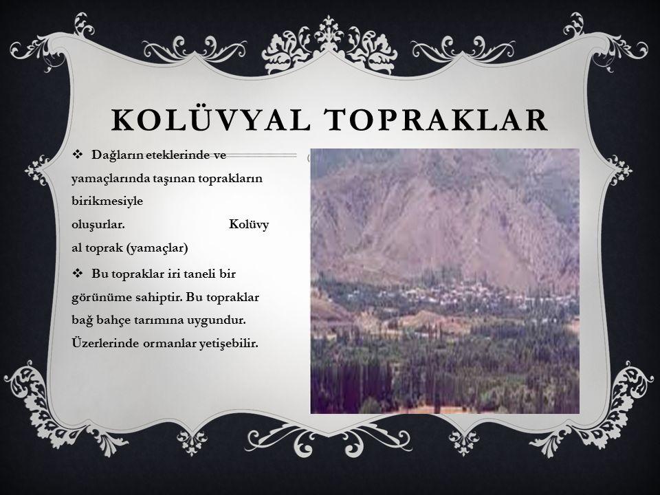 KOLÜVYAL TOPRAKLAR  Dağların eteklerinde ve yamaçlarında taşınan toprakların birikmesiyle oluşurlar. Kolüvy al toprak (yamaçlar)  Bu topraklar iri t