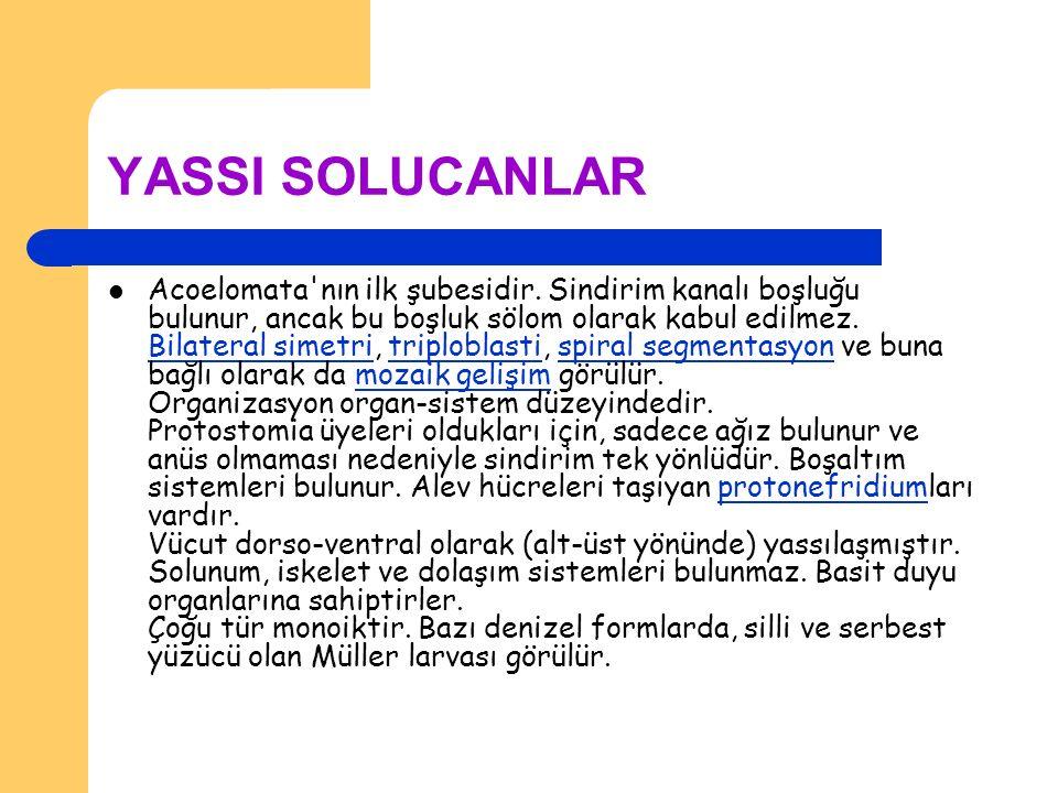 YASSI SOLUCANLAR Acoelomata'nın ilk şubesidir. Sindirim kanalı boşluğu bulunur, ancak bu boşluk sölom olarak kabul edilmez. Bilateral simetri, triplob