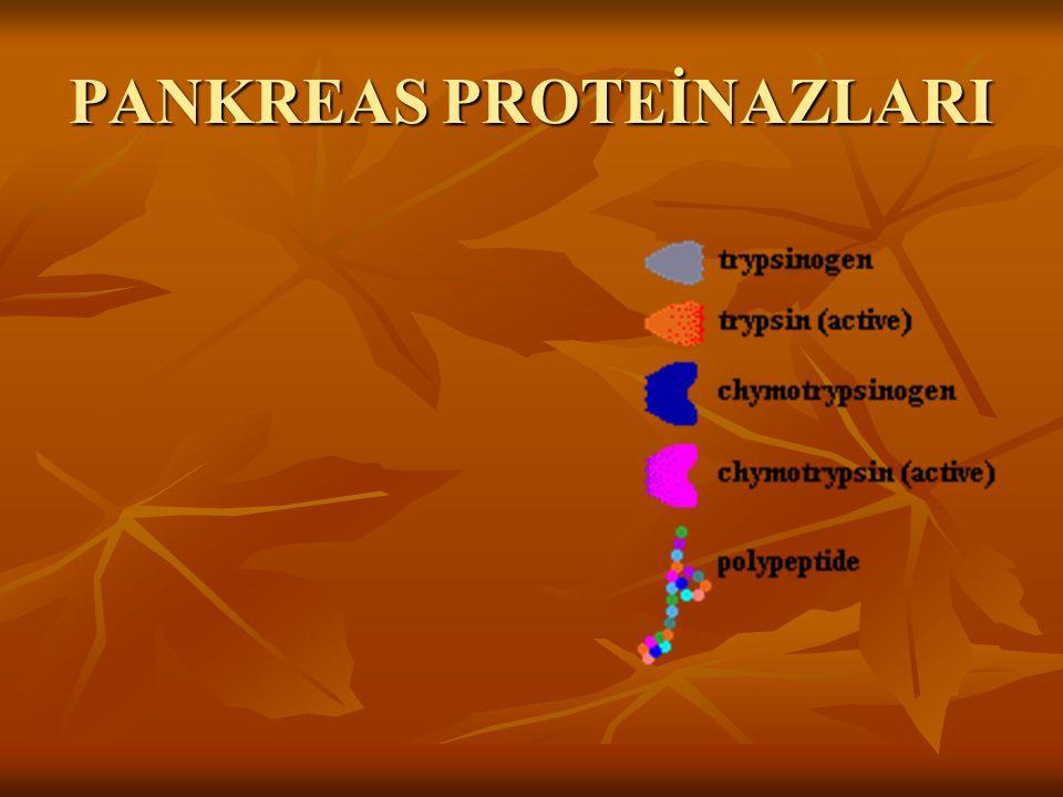 PANKREAS PROTEİNAZLARI