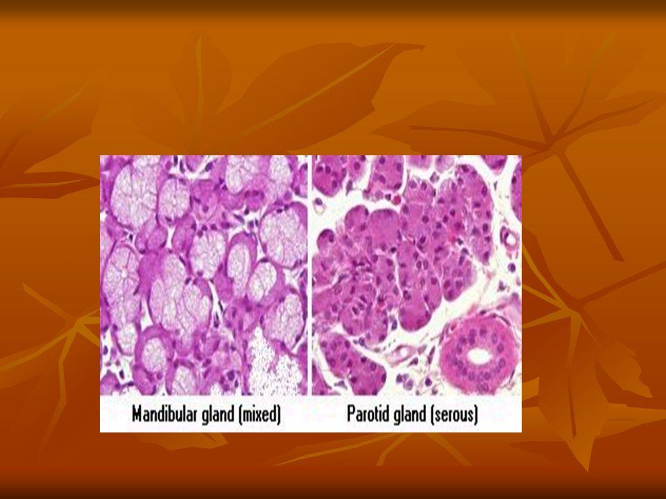 SAFRA Karaciğer tarafından yapılan safra safra kesesinde depo edilir.Yağlı kimus mideyeden duedonuma geçtiği zaman duedonumdan salgılanan kolesistokinon hormonu safra salgısını uyarır ve safra oddi sfinkteri vasıtasıyla duedonuma dökülür.