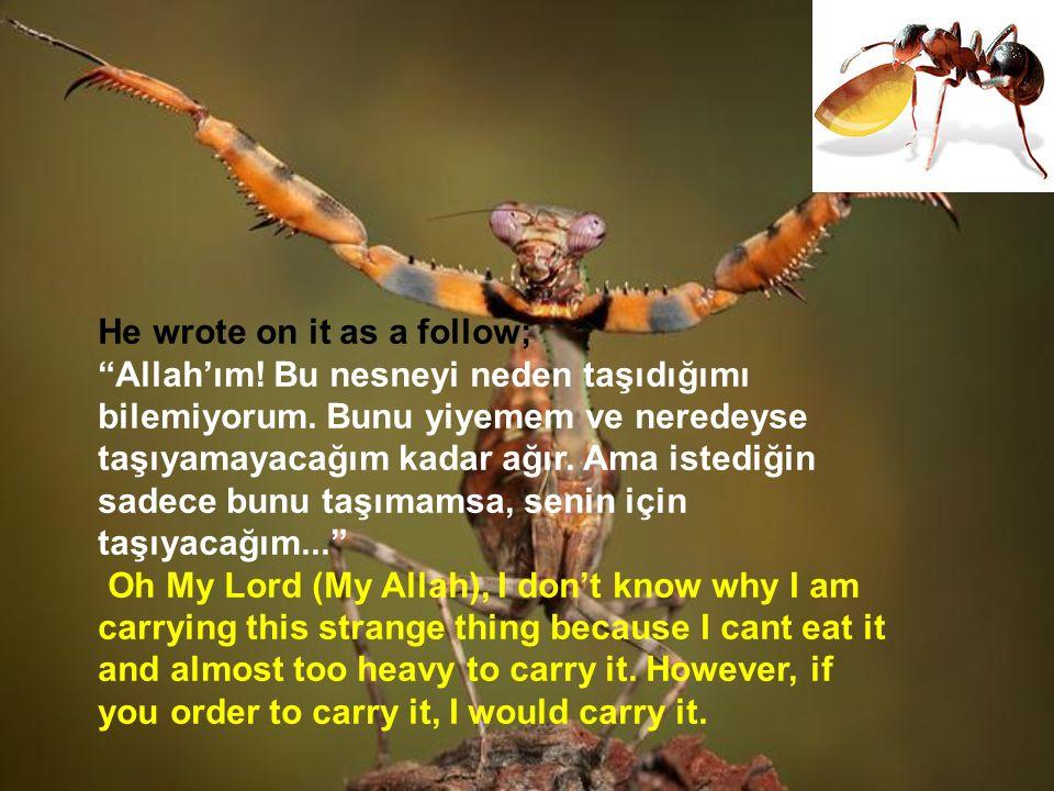 """He wrote on it as a follow; """"Allah'ım! Bu nesneyi neden taşıdığımı bilemiyorum. Bunu yiyemem ve neredeyse taşıyamayacağım kadar ağır. Ama istediğin sa"""