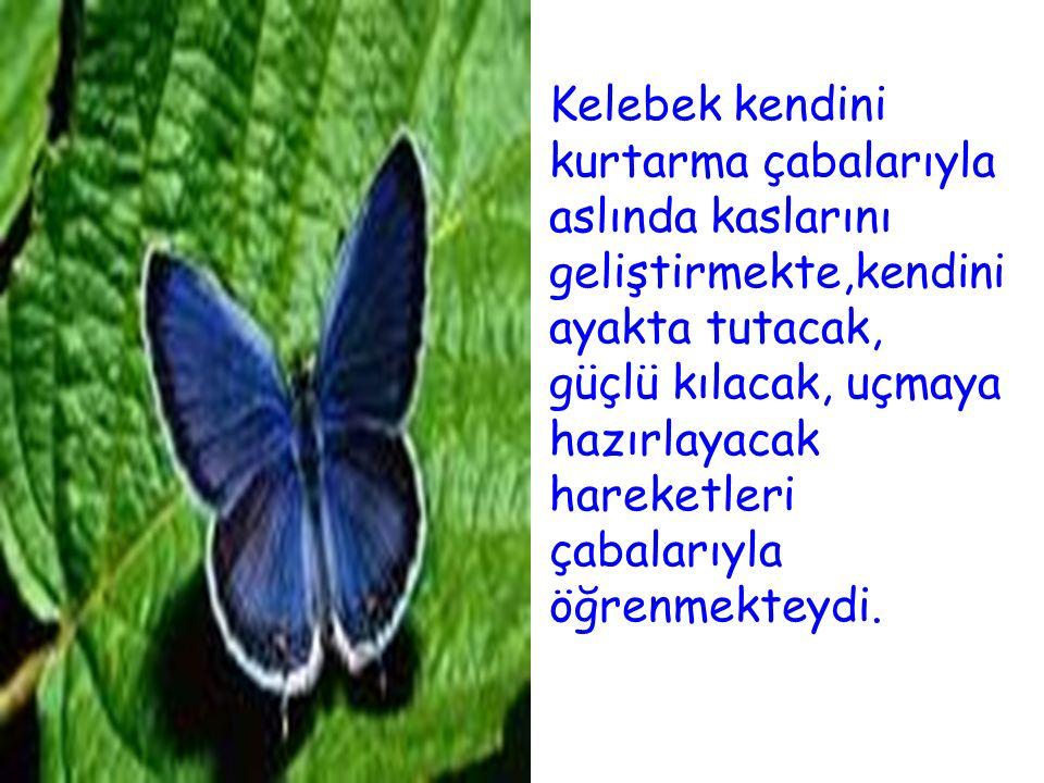 Kelebek kendini kurtarma çabalarıyla aslında kaslarını geliştirmekte,kendini ayakta tutacak, güçlü kılacak, uçmaya hazırlayacak hareketleri çabalarıyl