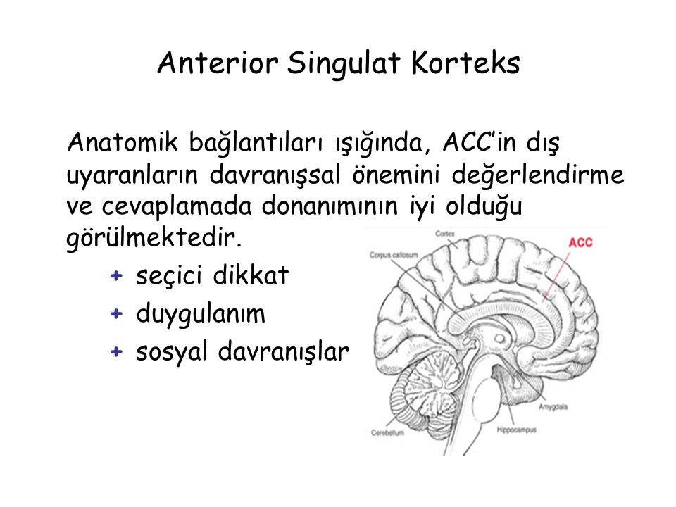 Anterior Singulat Korteks Anatomik bağlantıları ışığında, ACC'in dış uyaranların davranışsal önemini değerlendirme ve cevaplamada donanımının iyi olduğu görülmektedir.