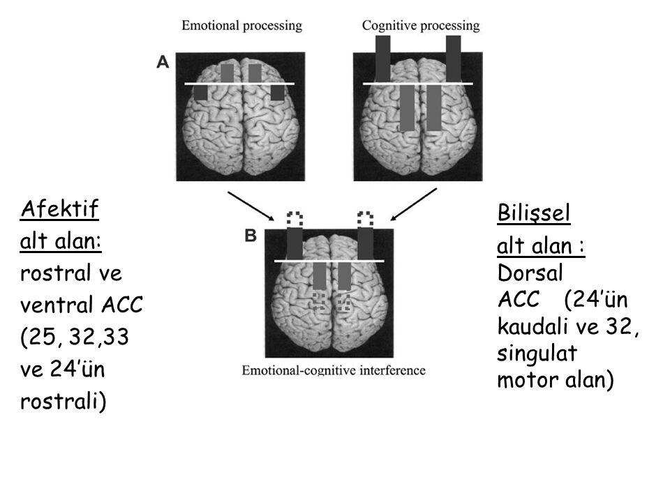 Afektif alt alan: rostral ve ventral ACC (25, 32,33 ve 24'ün rostrali) Bilişsel alt alan : Dorsal ACC (24'ün kaudali ve 32, singulat motor alan)
