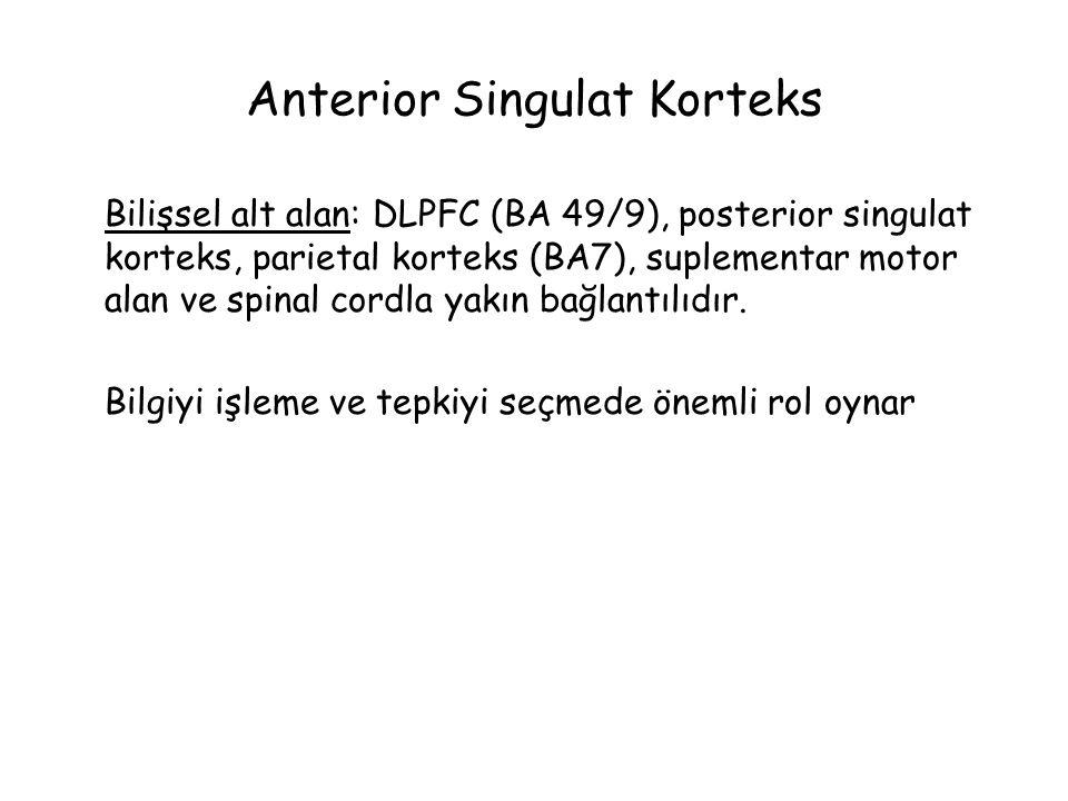 Anterior Singulat Korteks Bilişsel alt alan: DLPFC (BA 49/9), posterior singulat korteks, parietal korteks (BA7), suplementar motor alan ve spinal cordla yakın bağlantılıdır.