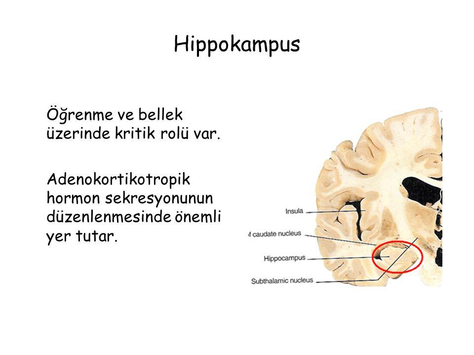 Hippokampus Öğrenme ve bellek üzerinde kritik rolü var.
