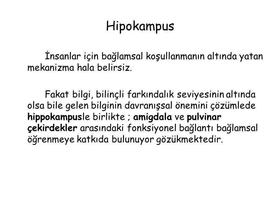 Hipokampus İnsanlar için bağlamsal koşullanmanın altında yatan mekanizma hala belirsiz.