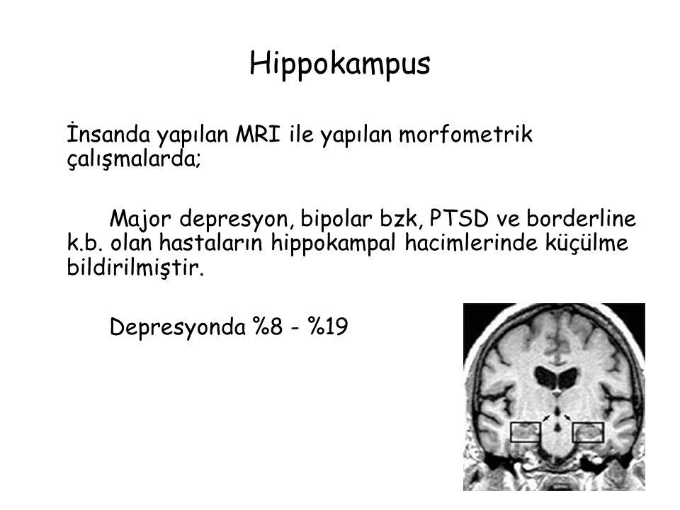 Hippokampus İnsanda yapılan MRI ile yapılan morfometrik çalışmalarda; Major depresyon, bipolar bzk, PTSD ve borderline k.b.