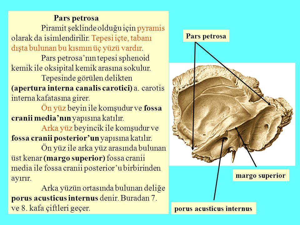 Pars petrosa Piramit şeklinde olduğu için pyramis olarak da isimlendirilir. Tepesi içte, tabanı dışta bulunan bu kısmın üç yüzü vardır. Pars petrosa'n