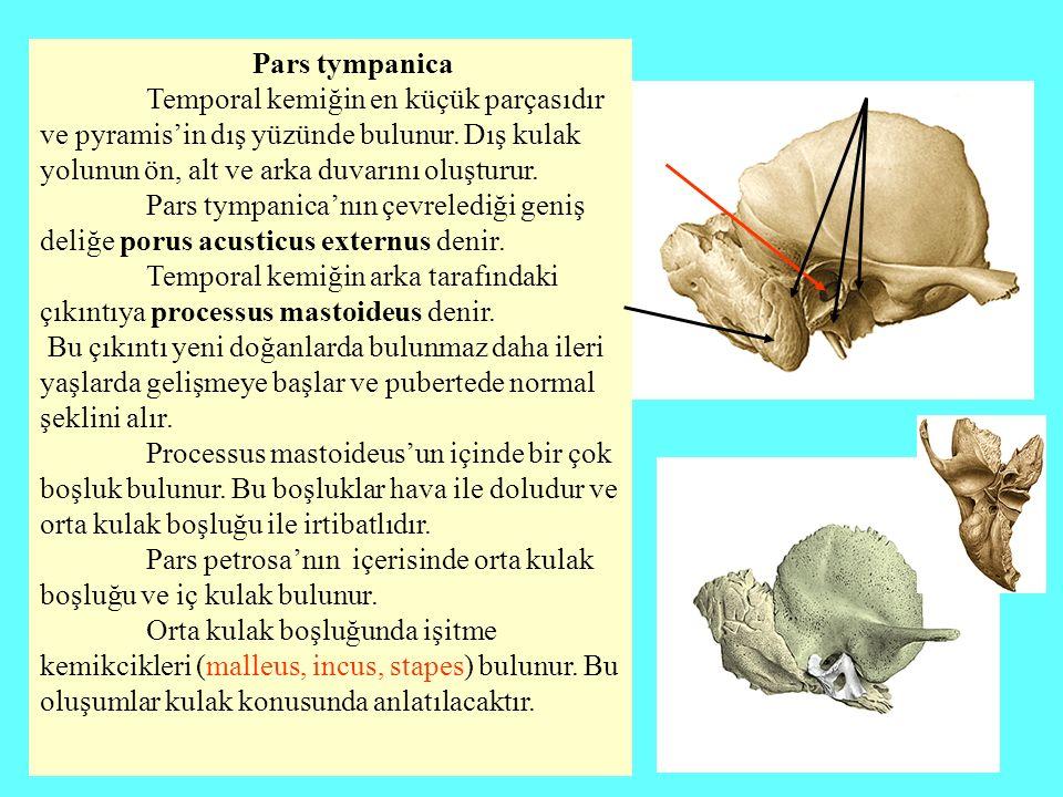 Pars tympanica Temporal kemiğin en küçük parçasıdır ve pyramis'in dış yüzünde bulunur. Dış kulak yolunun ön, alt ve arka duvarını oluşturur. Pars tymp