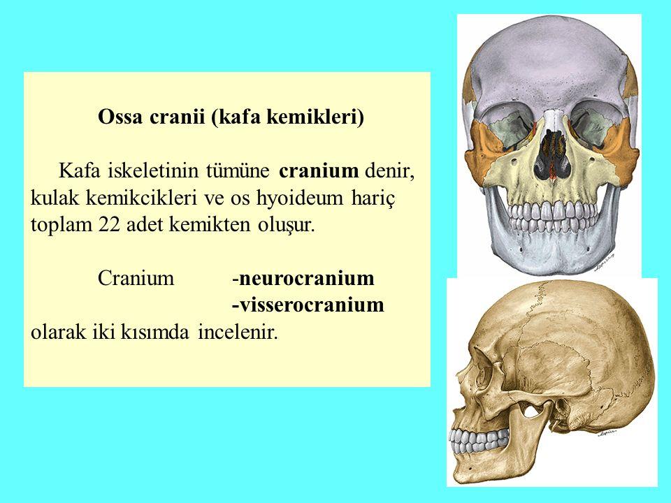 os frontale os occipitale os sphenoidale os ethmoidale os parietale