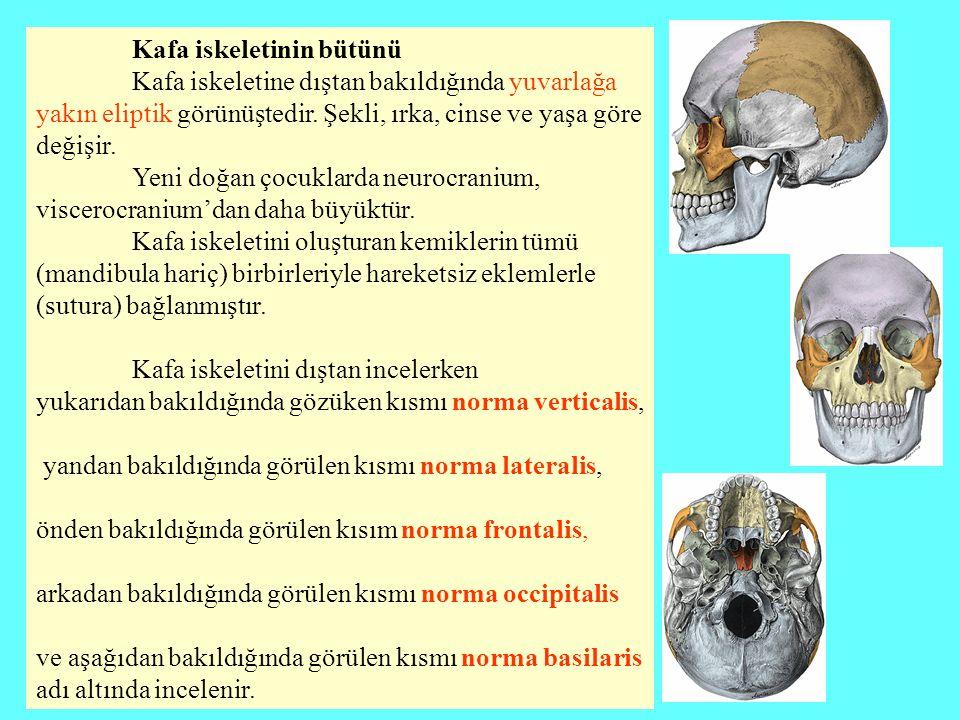 Kafa iskeletinin bütünü Kafa iskeletine dıştan bakıldığında yuvarlağa yakın eliptik görünüştedir. Şekli, ırka, cinse ve yaşa göre değişir. Yeni doğan