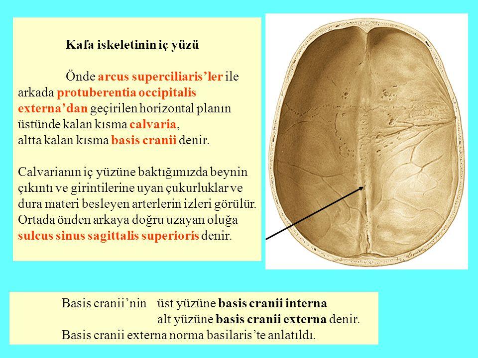 Kafa iskeletinin iç yüzü Önde arcus superciliaris'ler ile arkada protuberentia occipitalis externa'dan geçirilen horizontal planın üstünde kalan kısma