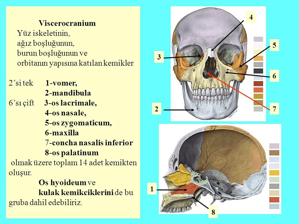 Viscerocranium Yüz iskeletinin, ağız boşluğunun, burun boşluğunun ve orbitanın yapısına katılan kemikler 2'si tek 1-vomer, 2-mandibula 6'sı çift 3-os