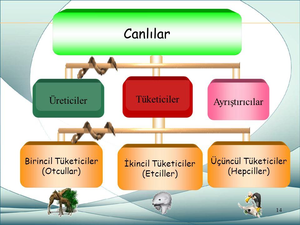 Canlılar Tüketiciler Üreticiler Ayrıştırıcılar Birincil Tüketiciler (Otcullar) İkincil Tüketiciler (Etciller) Üçüncül Tüketiciler (Hepciller) 14