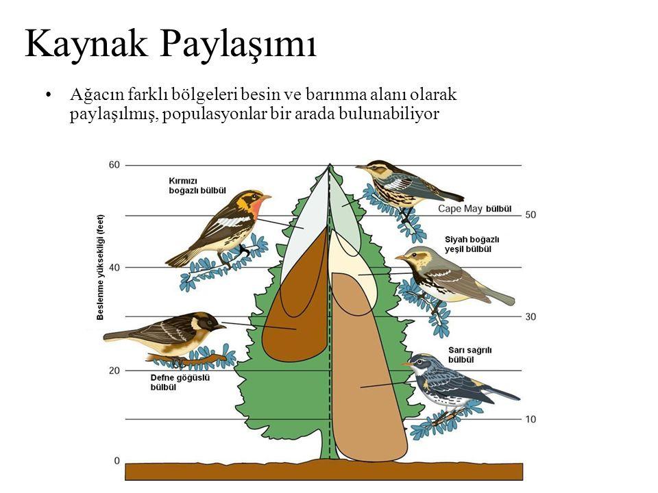 Kaynak Paylaşımı Ağacın farklı bölgeleri besin ve barınma alanı olarak paylaşılmış, populasyonlar bir arada bulunabiliyor