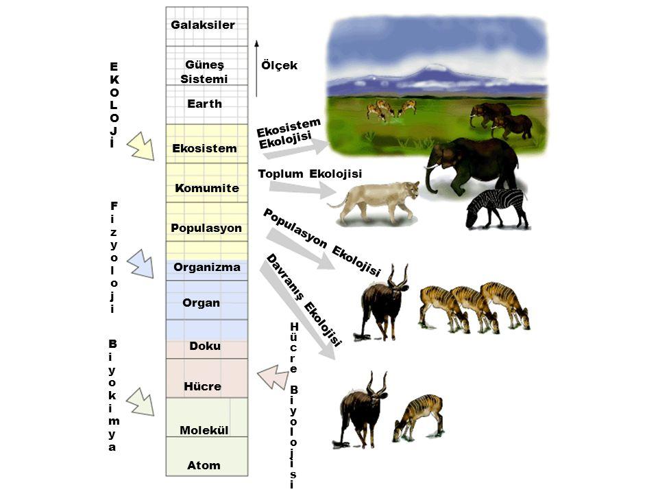 Rekabet Üstünlüğü İki tür birbirine çok benziyor ise, ekolojik nişler çakışır.