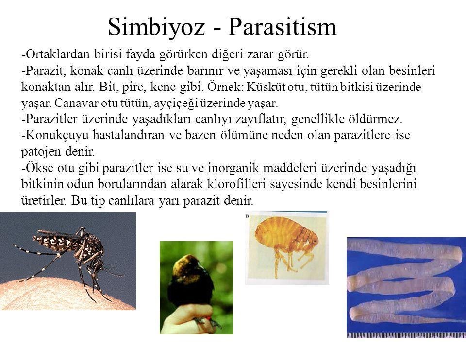 Simbiyoz - Parasitism -Ortaklardan birisi fayda görürken diğeri zarar görür. -Parazit, konak canlı üzerinde barınır ve yaşaması için gerekli olan besi