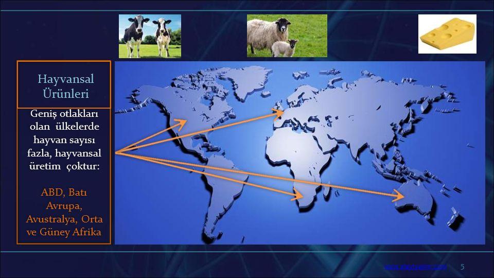 5 Geniş otlakları olan ülkelerde hayvan sayısı fazla, hayvansal üretim çoktur: ABD, Batı Avrupa, Avustralya, Orta ve Güney Afrika Hayvansal Ürünleri w