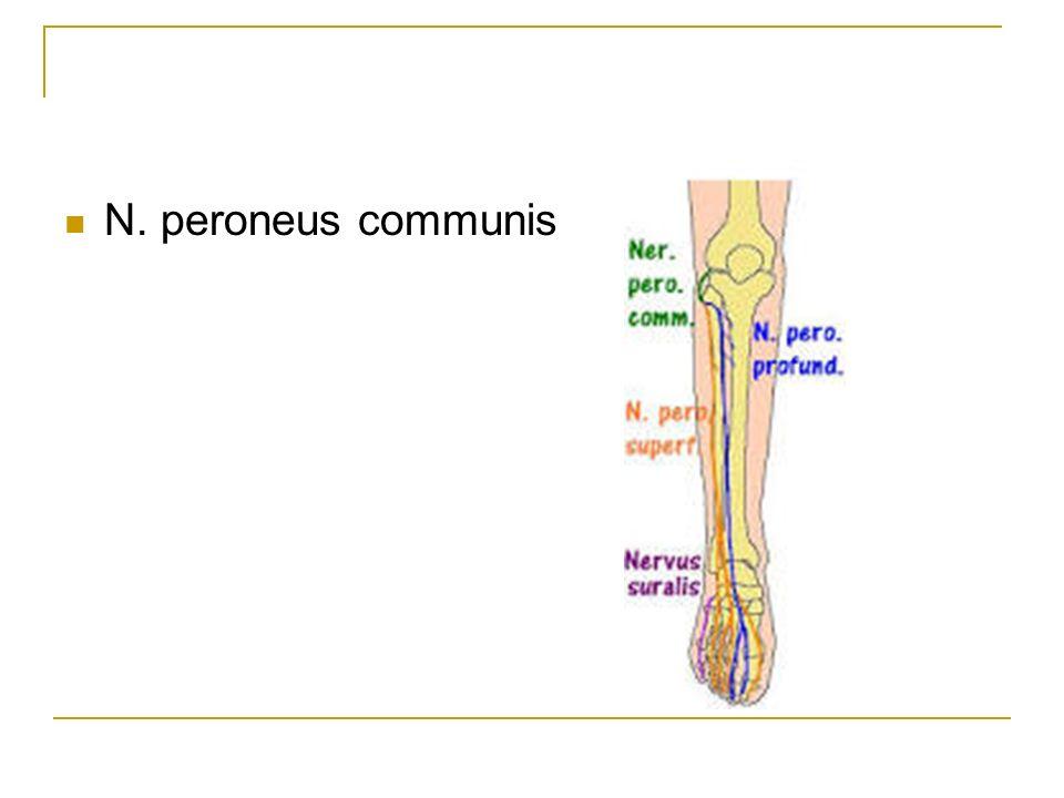 N. peroneus communis