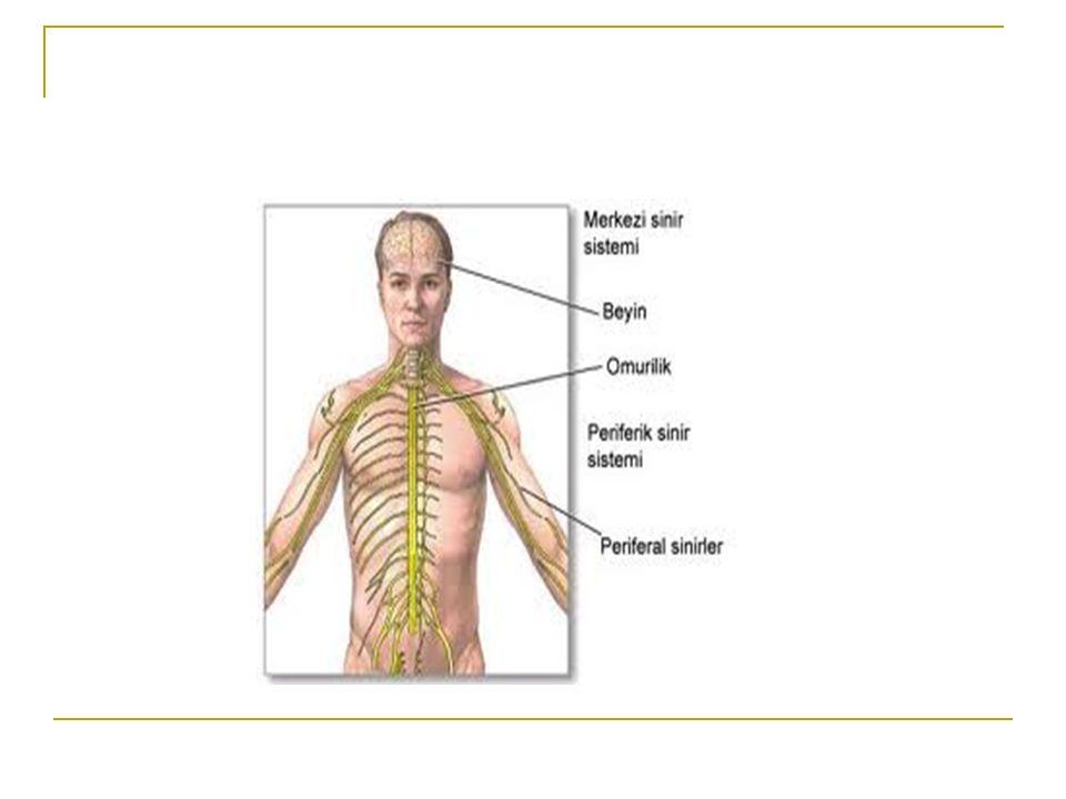 Ortezleme Denerve kaslarda aşırı gerilmeyi önlemek Denerve kasın antagonisti olan kasta kontraktür gelişimini önlemek Eklem kontraktürlerini önlemek Duyu kaybı olan ve zayıf ekstremitede eklem ve bağların yaralanmalardan korunmasını sağlamak Elin fonksiyonel kapasitesini arttırmak