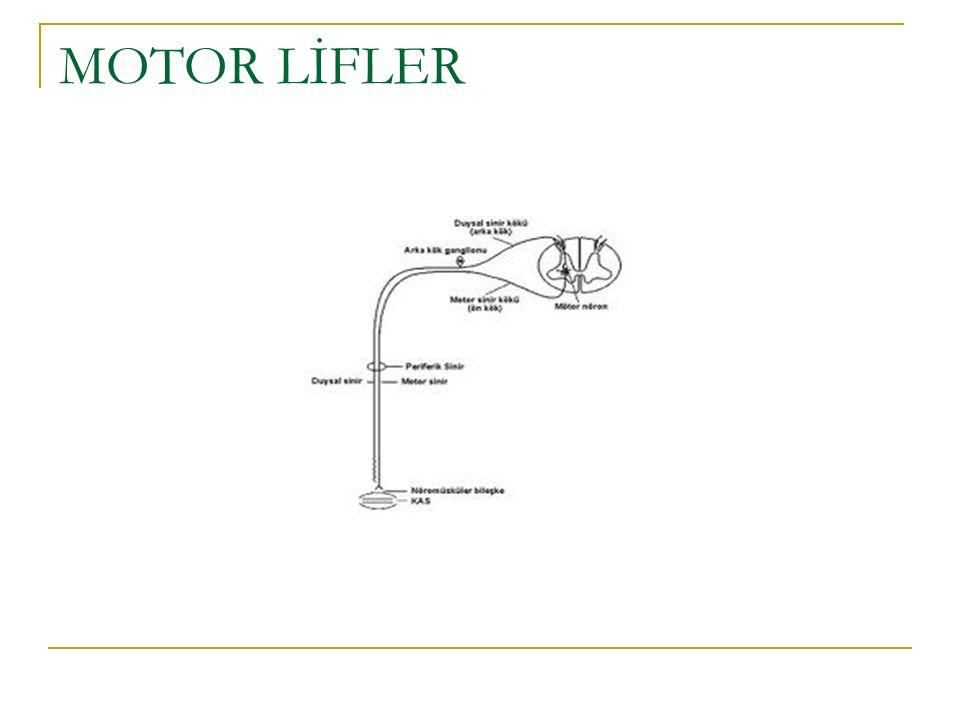 C5-6 biceps,deltoid,brakioradialis,infra ve supraspinatus,brachialis,rhomboid ve teres minor paralitik
