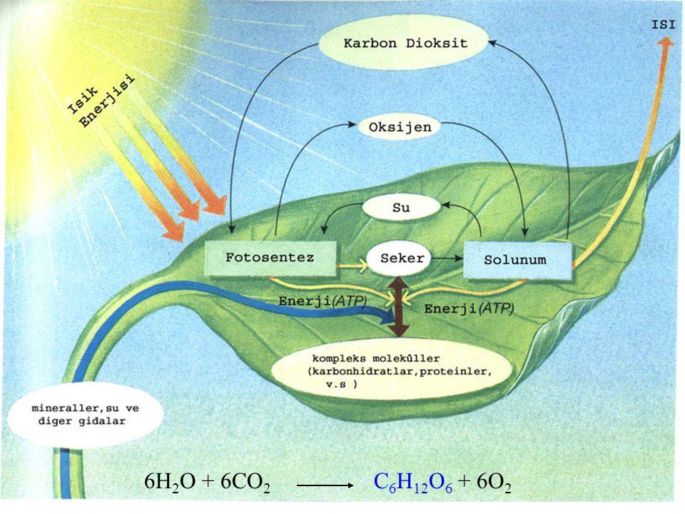 Güneşten gelen enerji Üreticiler Birincil Tüketici İkincil Tüketici % 90 % 9 % 0,9 %100 % 10% 1% 0,1 Enerji Akışı Enerji Kaybı Güneşten gelen enerjinin kullanımı 8